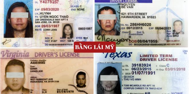 Đổi bằng lái xe Mỹ sang Việt Nam giá rẻ