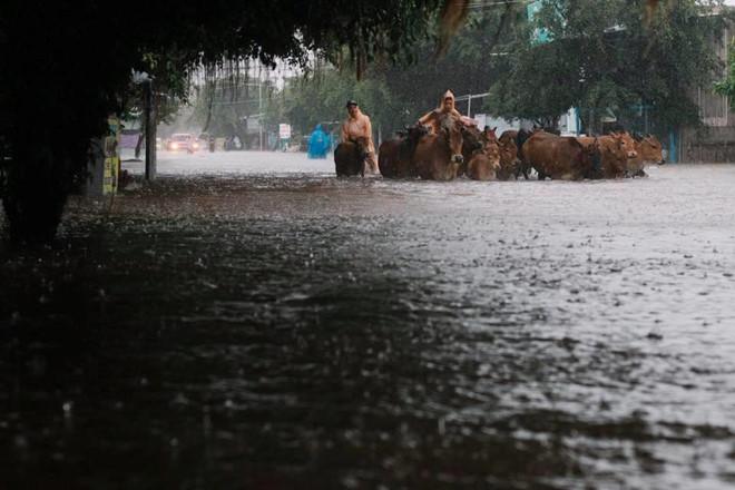 Người dân Phú Quốc vật lộn trong trận đại hồng thủy